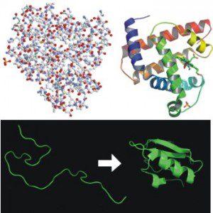 Protein Folding1