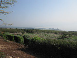 Looking down to Galilee from the Church of Beatitudes (my pic)