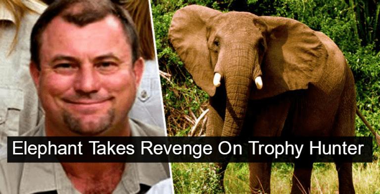 Elephant Takes Revenge On Trophy Hunter Theunis Botha (Image via Twitter)
