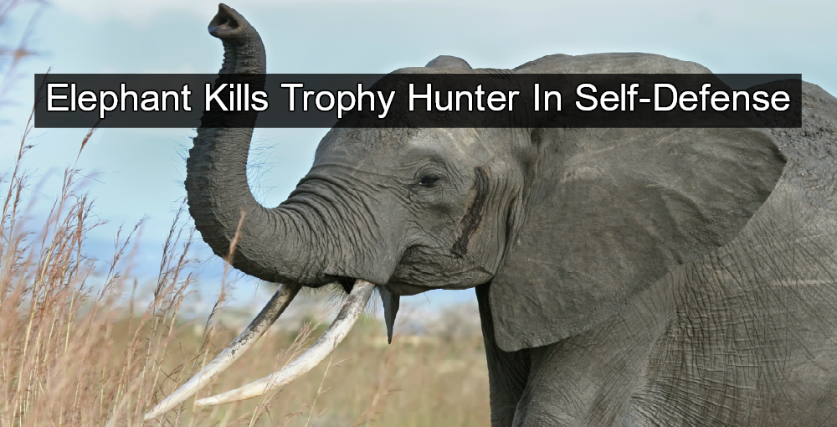 Elephant Kills Trophy Hunter In Namibia (Image via Wikimedia)