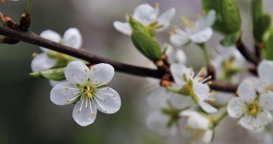 Easter springtime treee