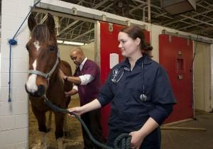 veterinarians-739365_1280