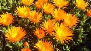 flowers-659070__180