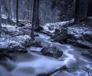 forest-648512_1920