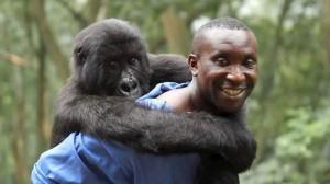 """Andre Bauma with a gorilla friend, in """"Virunga"""""""
