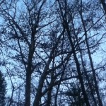 trees with bare branches