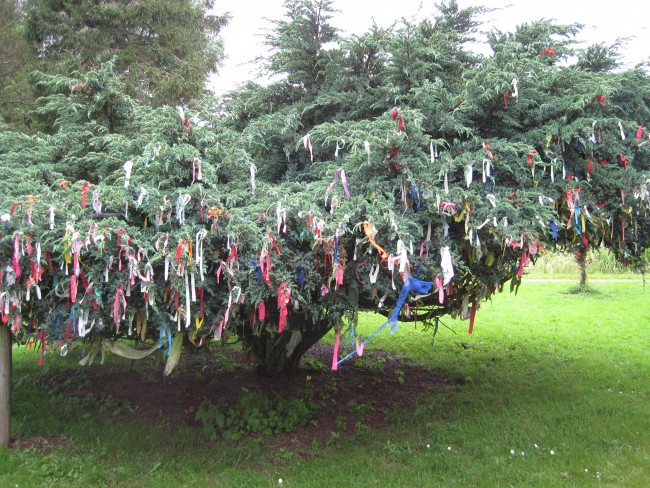 Clutie tree.  Samye Ling Tibetan Buddhist Center, Scotland.
