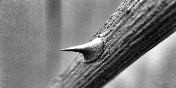 """Thorn in my side,"" Andy B, Flickr C.C."