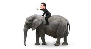 Rider and Elephant