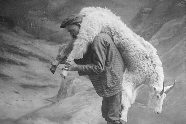Girard continues to be ever more relevant after his death and recent events in Paris (Anonymous, S.A. Crawford carrying a goat. Studio portrait showing man carrying a goat over his shoulder, in front of a painted backdrop of snow-covered mountains, 1905; Source: Wikimedia Commons, PD-Registered Before-1923).