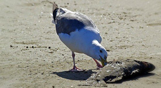 This seagull even knows that something stinks here