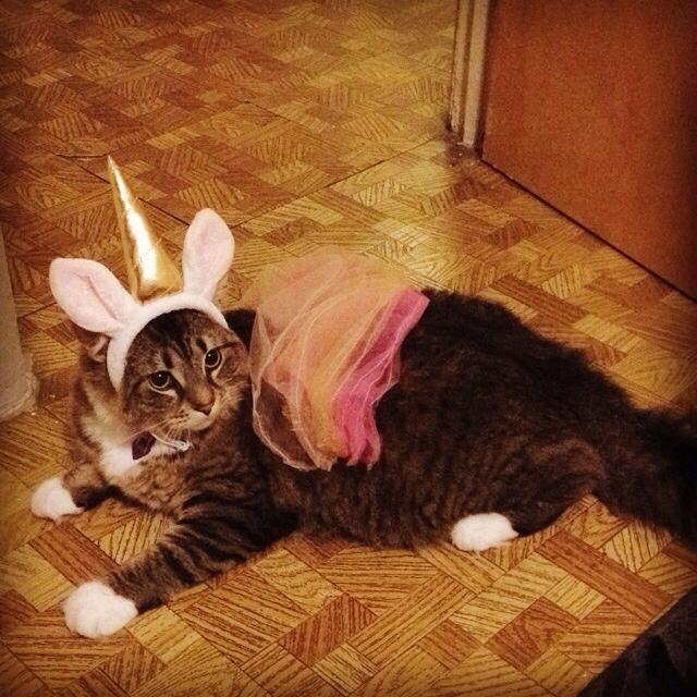 Princess unicorn kitteh