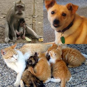 monkey cat dog