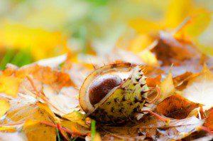Autumn by George Hodan (public domain image).
