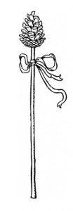 Thyrsus. Image courtesy of Wikimedia Commons (public domain image).