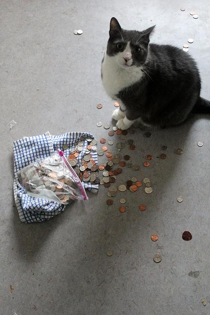 Bling meets gravity meets cat. (Credit: Quinn Dombrowski, CC license.)
