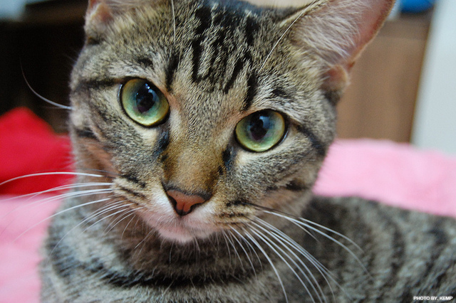 P.S. If this seemed harsh at all, here's a picture of a cat to soften the blow. [photo anaa yoo (CC BY-ND 2.0)]