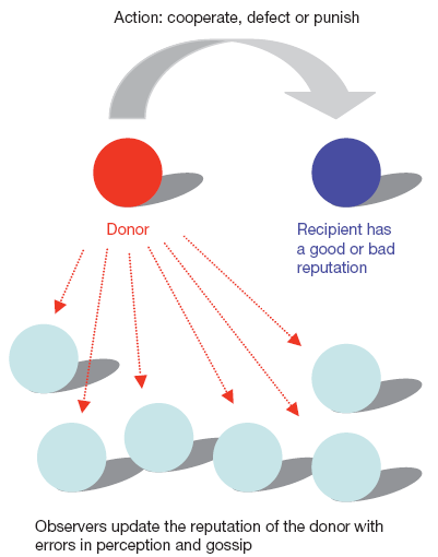 Nowak_indirect_reciprocity