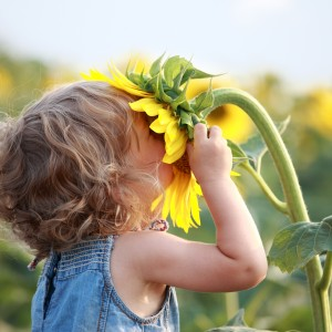 Description: a young white child buries her face in a sunflower.
