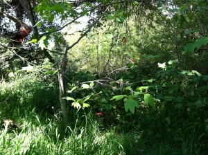 Description: lush, green trees and grass.