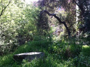 Description: more trees and grass, with a stump in the foreground.
