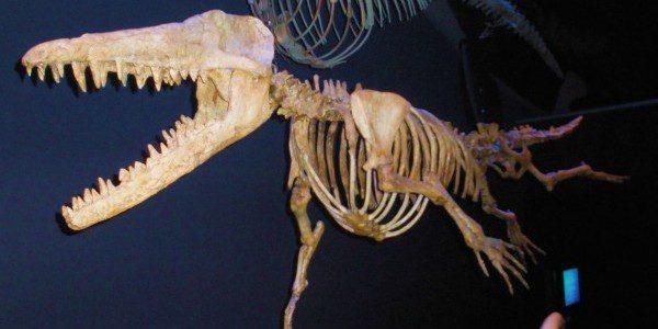 "Ambulocetus, ""Walking Whale"""