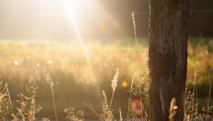 sun-trees Zwadi Unsplash