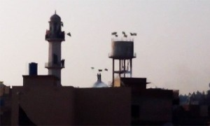A photo of the Ahmadi Mosque in Chakwal - courtesy of Rabwah Times Twitter