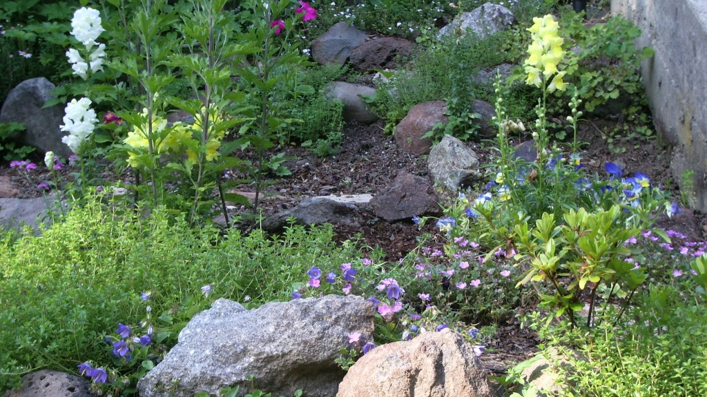 Floricide: An empty spot in a rock garden where owner's awful snapdragons had been . Photo by Barbara Newhall