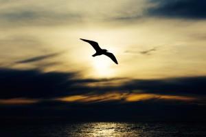 seabird-768584_1920