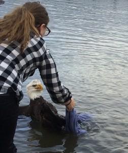 Portland Audubon Picture of Eagle Rescue
