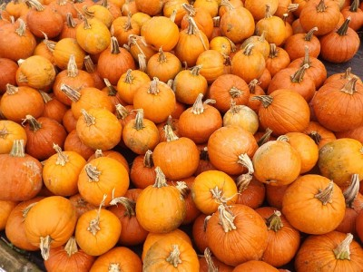 pumpkins-115065_640
