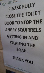 A useful thing to know about angry squirrels. (Credit: Anne Thorniley, CC license.)