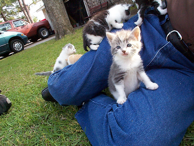 """This is the only acceptable way to be overrun by a tribe. (""""Kittens on Grandpa,"""" credit: Heather Hopkins, CC license.) BTW, these were rescue kittens and yes, they all found good homes, according to the photographer."""