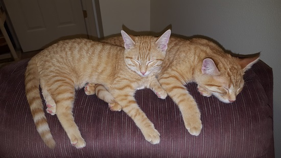 Here, have some kittens. The Flood didn't happen. It's just a horrific myth that Christians don't think about really.