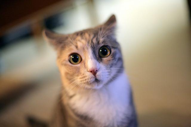 Dubious cat is dubious. (Credit: Alan Turkus, CC license.)