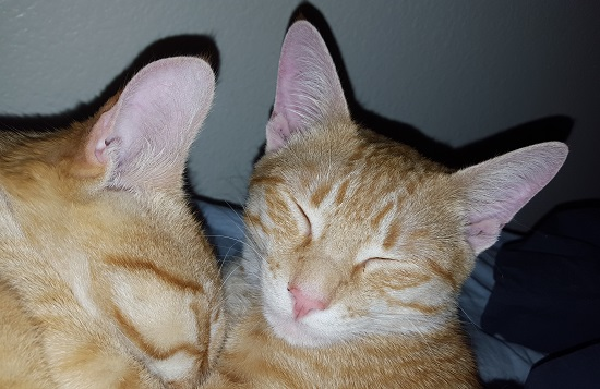 I was looking for photos of happy kittens and realized I had two of 'em right here.