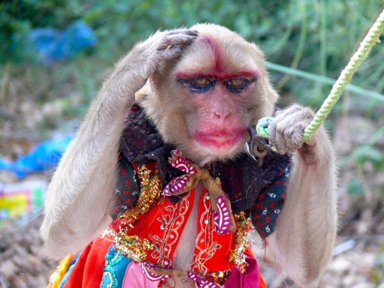 Картинка обезьянка накрашенная