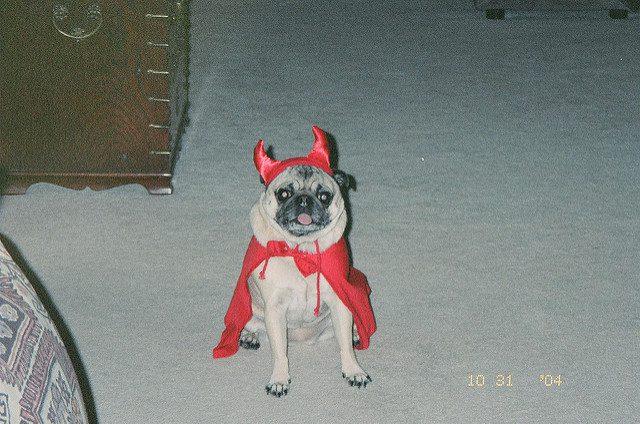A demon dog! (Credit: Christine Olson, CC-ND.)
