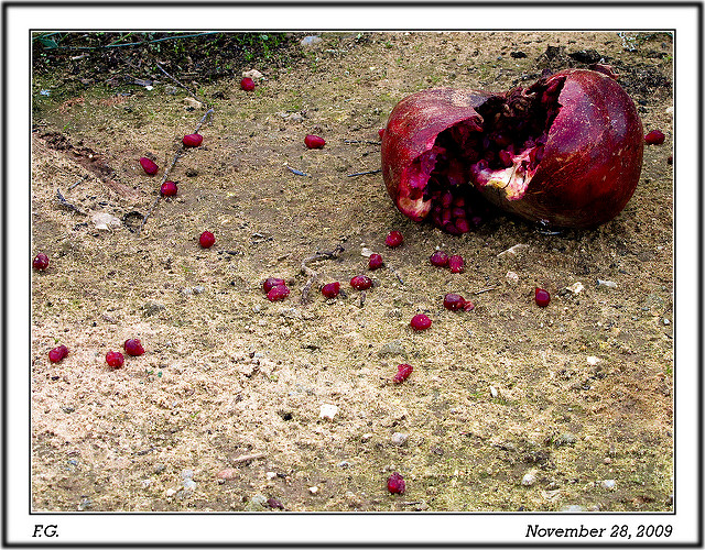 Rotten fruit. (Flavio~, CC.)
