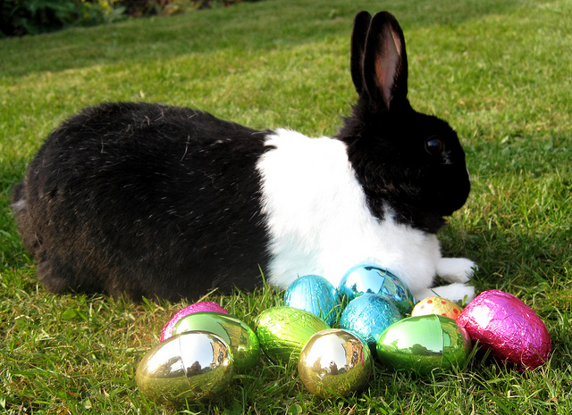 (Easter Bunny, CC.)