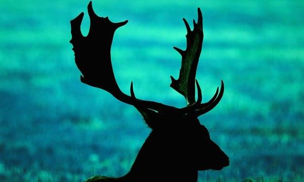 a teal deer