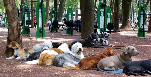 dogs relaxing at an obedience school