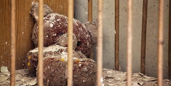 a decaying teddy bear in a crib in pripyat