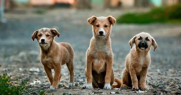 brave little dogs in Marrakesh