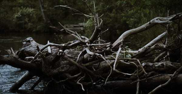 tangled up tree branches