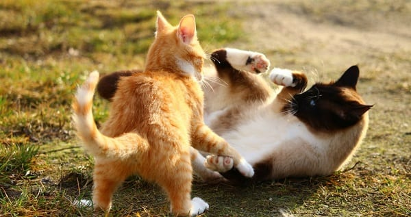 two kittens fighting