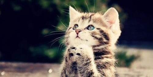 the power of prayer for cats (also doesn't work)