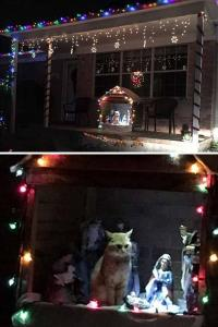 annoyed ginger cat sits in an outdoor nativity set