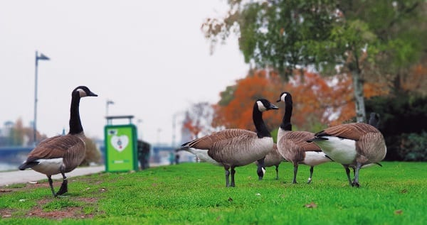 a nerd goose tries to be social